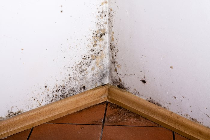Mold Testing & Remediation by Specialty Water Damage Restoration LLC
