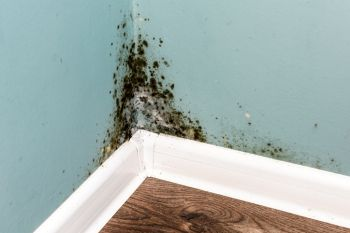 Mold Remediation in Sun City West Arizona by Specialty Water Damage Restoration LLC
